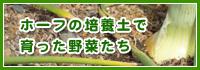 ホーフの培養土で育った野菜たち